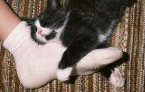 Почему кошка спит с человеком