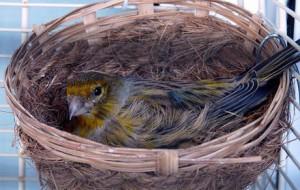Самодельное гнездо