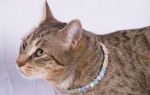 Ожерелье для кота
