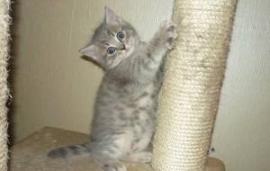 У кошки слоятся когти — что делать?