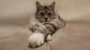 Сколько живут кошки в среднем