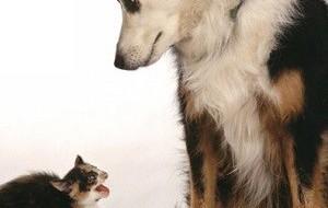 Кошки или собаки?