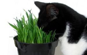 Кошачья мята: ваш кот – наркоман?