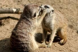 В Смоленском зоопарке выбирают лучшую пару