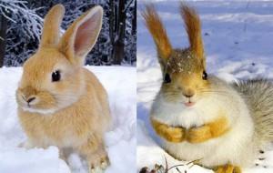 В Смоленском поозерье в этом году стало больше зайцев и белок
