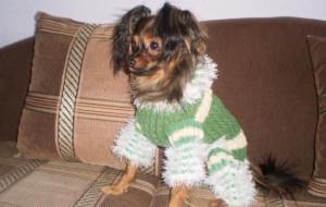Покупка одежды для собаки гораздо более ответственное дело, чем покупка одежды для самого себя