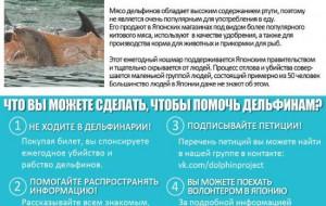 Зоозащитники будут пикетировать приехавший в Смоленск дельфинарий