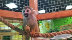 Зоопарк в Смоленске предлагает покормить своих питомцев