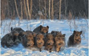 В Смоленской области посчитали лесных зверей