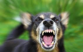 В Смоленске собак и кошек привьют от бешенства
