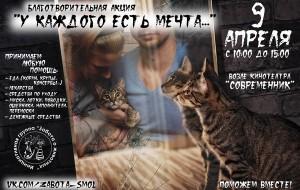 Смоленские волонтёры проведут акцию в помощь бездомным животным