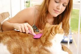 Уход за кошачьей шерстью. Стоит мыть или нет?