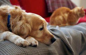 В Беларуси штрафуют за домашних животных