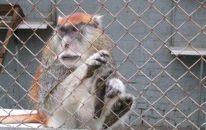 Названы самые популярные животные Московского зоопарка