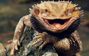 Рептилии способны видеть сны
