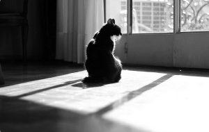 Кастрация кота: зачем, когда и как ?