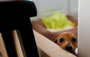 Почему скулит собака?