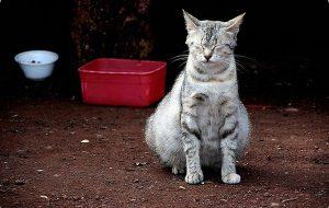 Беременность кошки: признаки и рекомендации