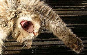 Блохи у кошек: признаки и способы борьбы