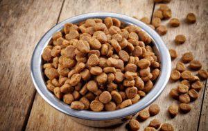 Каким должен быть идеальный корм для животных?