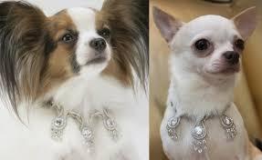 Бриллианты – лучшие друзья собак