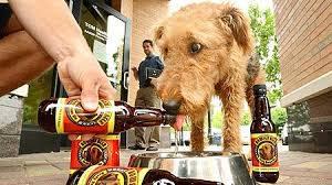 Пиво для собак
