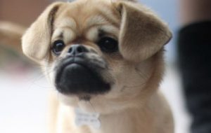 Собаки умеют завидовать