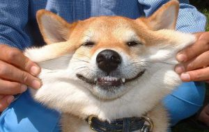 Улыбается ли ваша собака?