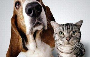 Доказано превосходство собак над кошками