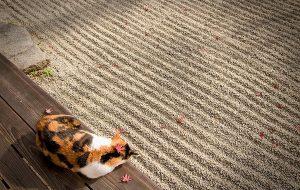 Как помочь кошке в жаркую погоду