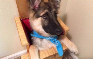 Специальное сиденье помогает собаке усваивать пищу