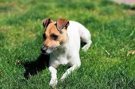12 генов делают собак агрессивными