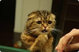 Кошки и валерьянка — афродизиак или наркотик?