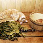 Сауна для кошек и собак