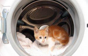 Что опасно для кошек в нашем доме?