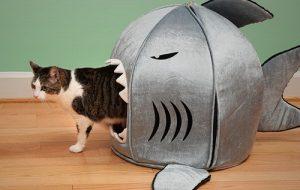 Нанотехнологии на службе у кошек