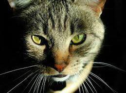 Кошки способны мстить
