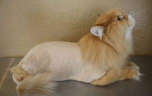 Как подстричь кошку дома?