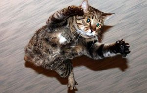 Как падают кошки?
