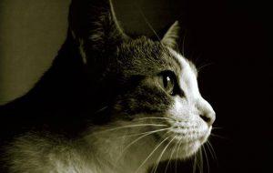 Как ухаживать за стареющей кошкой?