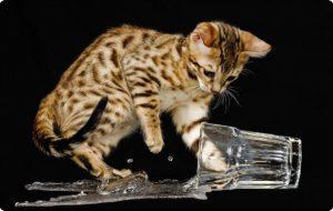 Кошки и законы физики