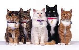 Как определить характер котенка по его окрасу?