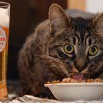 Почему кошкам нельзя давать пищу с нашего стола?