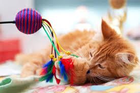 Какие выбрать игрушки для кошки?