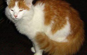 Что делать, если кошка проявляет агрессию?