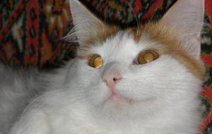 Как отучить кошку точить когти о мебель?