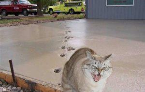 Как отучить кошку гадить?