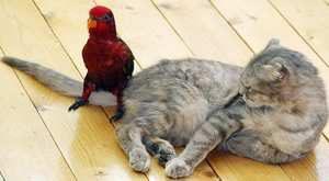 Кошка и другие животные в доме
