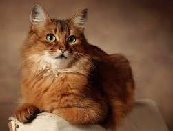 Типы поведения кошек