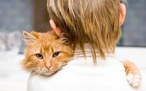 Правда ли, что кошки лечат?